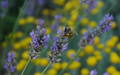 Les abeilles de Hyelzas